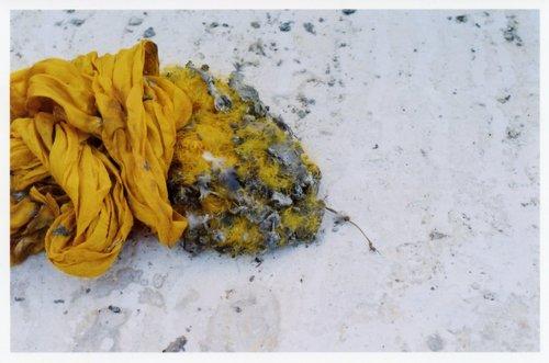Yellowfeathercloth